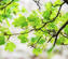 branch-with-green-leaves-at-spring-judith-barath